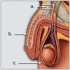 Operasjonsforløp ved penisforstørrelse